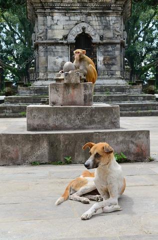 depositphotos_32750251-stock-photo-monkey-ahd-dog.thumb.jpg.b06cacb40dcbdb477fc0adbe3e57cda7.jpg